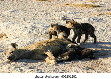 Mother Hyena and Her Cubs