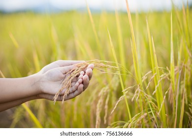 Mother and kid hand holding young rice together with tenderness in the paddy field in vintage color tone