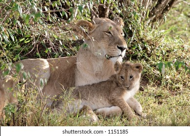 Mother lioness with cub