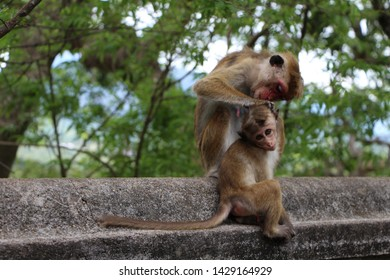 A mother monkey fleeing her baby monkey