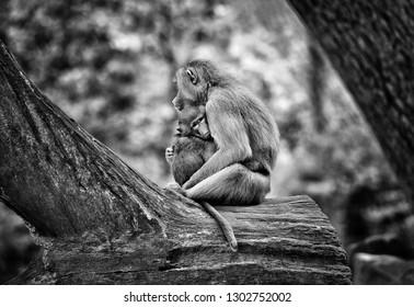 Mother monkey holding cute baby monkey