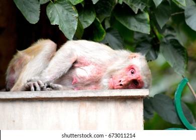 the mother monkey,mammal,sad,animal