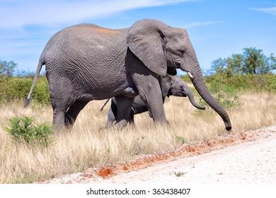 mother & son elephant at etosha