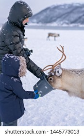 Mother and son feeding reindeer in the winter, Tromso region, Northern Norway