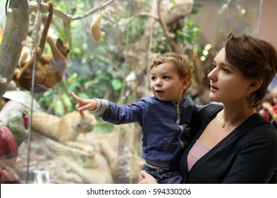 Mother and son looking at jungle in zoological museum