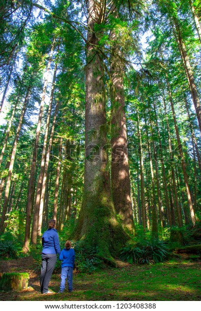Mother and son standing in a forest looking up at a large Sitak Spuce Tree.
