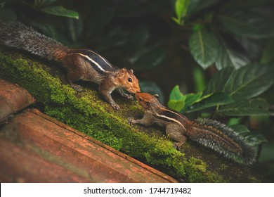 mother squirrel feeding her baby