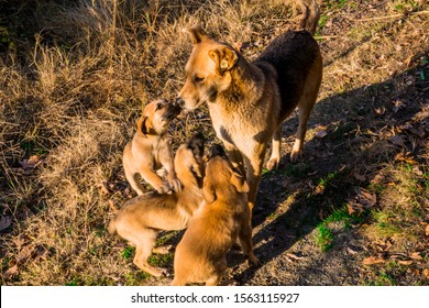 the mother stray dog with the puppies