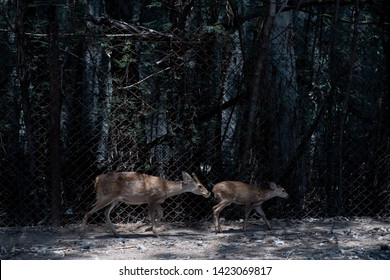 mother watch back for her little Bambi