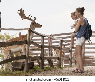 Mother with young daughter feeding the deers in a natural wild park