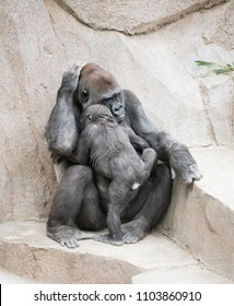 Mother and Young Gorilla