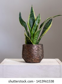 Mother-in-law's Tongue Viper's bowstring hemp snake plant