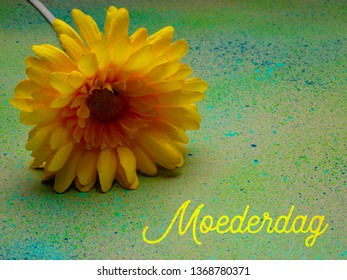 Mothers Day, a bright yellow gerbera flower on a green speckled background with the word Moederdag which is Mothers Day in Dutch.