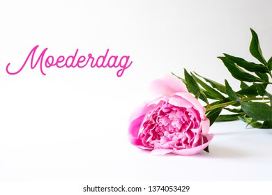 Mothers Day image. A pink peony on a white background. (Dutch: Moederdag means Mothers Day)
