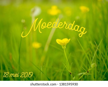 Mothers Day (moederdag in Dutch) with text of the date (mei is may in Dutch) in 2019. A yellow buttercup with a dreamy green grassy background.