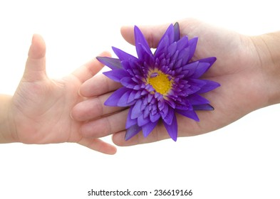 Mother's hand giving lotus to her baby on white background isolated