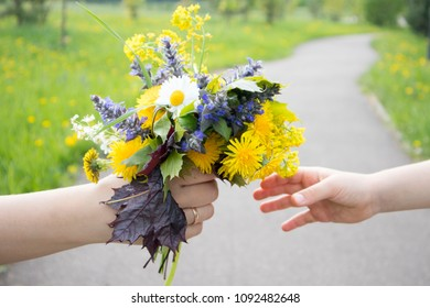 mother's hands give the child a bouquet of wild flowers. beautiful summer colors of nature.