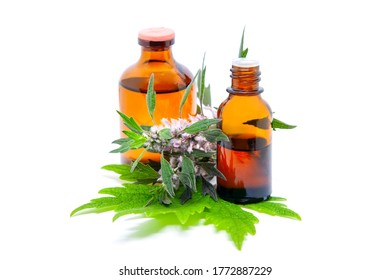 Motherwort (Leonurus cardiaca), pharmaceutical bottles with leaves and flowers of a medicinal plant. Isolated on a white background
