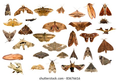 moths from Costa Rica