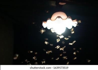 Moths flying in the light bulb