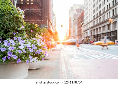 Motion blurred people and cars with colorful flowers on New York City streets with sunlight background