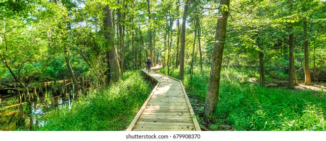 Motion blurred people jogging on nature trail boardwalk with bald cypress trees growing at Jesse Park & Nature Center in Texas, US. Outdoor recreational activities, human and nature contact. Panorama