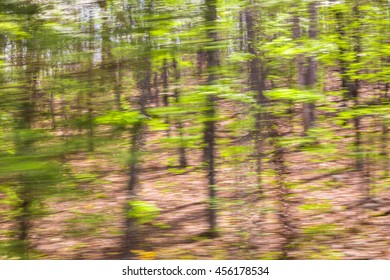 Motion blurred trees. Natural forest background with  panning motion.