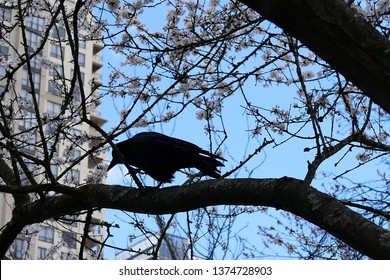 Motion of crow standing on tree and blowing tree leaf against blue cloudy sky