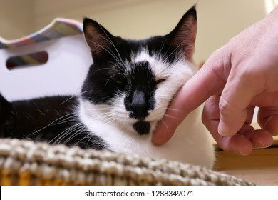 Motion of man stroking tabby cat on her face at home