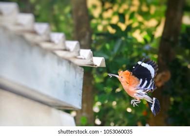 Bird Worm Images, Stock Photos & Vectors | Shutterstock
