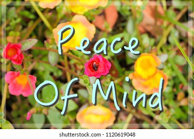Motivational Inspirational Quotes Peace Mind Nature Flower Stock