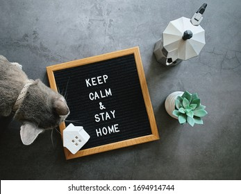 Motivational quote word keep calm and stay home on notice board with coffee and cute cat on black stone background, stay home and self quarantine concept for prevent covid 19 and coronavirus pandemic