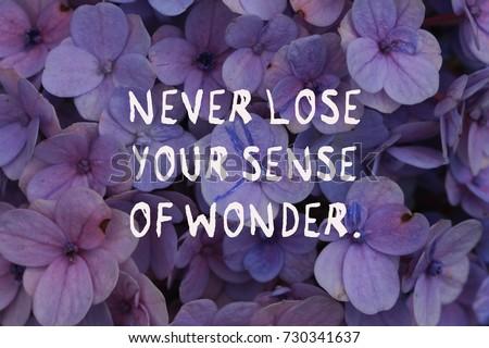Motivational Quotes Never Lose Your Sense Stock Photo Edit Now