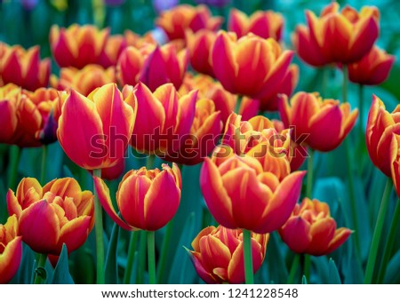 Motley Bright Spring Flowers Garden Hollands Stock Photo Edit Now