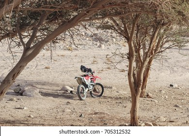 Moto cross bike parked by acacia trees in Sinai Desert, Egypt. Holiday adventure trip