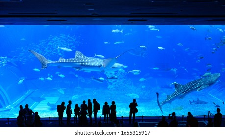 MOTOBU, OKINAWA, JAPAN - FEBRUARY 05, 2020: Visitors silhouetted in front of a giant aquarium tank at the Okinawa Churaumi Aquarium, containing whale sharks, manta rays and a total of 65 species.