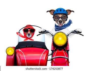 motorbike dogs together in love having a holiday trip