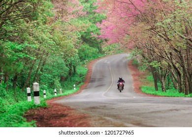 motorcycle bigbike on Road autumn springtime Popular travel tour