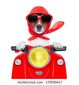 motorcycle dog summer dog driving a motorbike with sunglasses