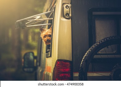 Motorhome Traveling with Dog. Small Silky Terrier Dog in Camper Van Window. Dog in RV Motorhome.
