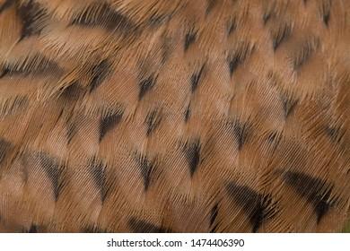 mottled texture of the pen Kestrel Falcon (Falco tinnunculus) close up