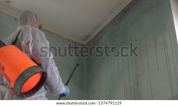 Mold Removal in White Plains
