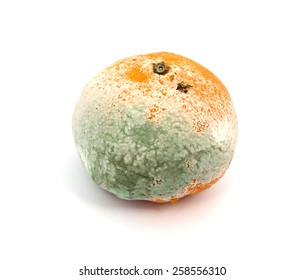 Mouldy Fruit
