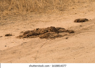 mound, heap, pile, load of animal dung, droppings, poop or faeces probably from an elephant or rhino, herbivore animal in the wild at Kruger national park, South Africa