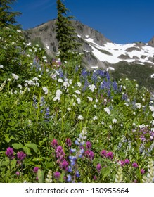 Mount Appleton with beautiful summer Wildflowers. Olympic National Park, Washington