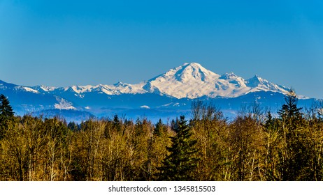 Mount Baker, a dormant volcano in Washington State viewed from Glen Valley near Abbotsford British Columbia, Canada under clear blue sky on a nice winter day