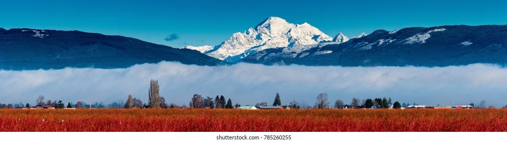 Mount Baker over Blueberry Fields