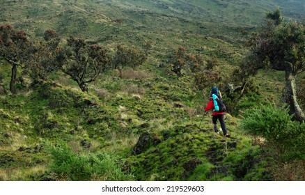 MOUNT CAMEROON, CAMEROON  - CIRCA JUNE, 2008  - Hiker from Europe on their way to Mt.Cameroon.