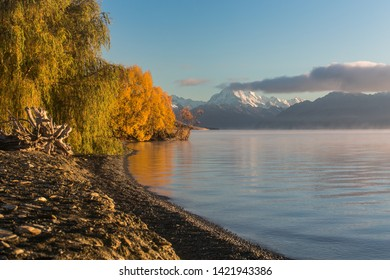 Mount Cook and yellow autumn tree near lake