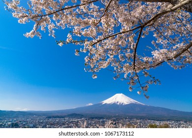 mount fuji and cherry bloosoms